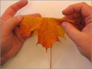 autumnleaf1