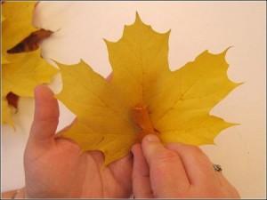autumnleaf4