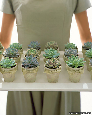 Pretty Potted Succulents - Perfect green favor idea for weddings or showers!